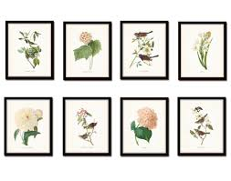 Floral Prints by Bird And Floral Print Set No 4 Redoute U0026 Audubon Prints