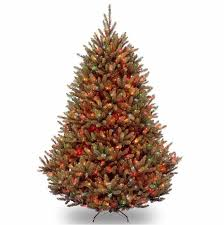 best 25 fraser fir tree ideas on balsam fir