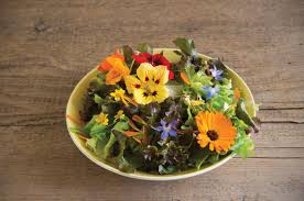 edible flowers for sale edible flower collection seed johnny s selected seeds