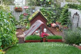 Best Laying Hens For Backyard Living Homegrown