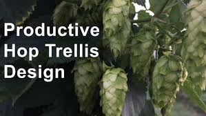 productive hop trellis design youtube