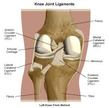 Back Knee Anatomy Behind Knee Joint Pain Diagnosis U2013 Relief Symptoms By Exercises