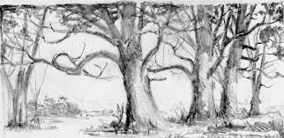 tree drawing pencil tree drawings in pencil bing images trees