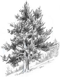realistic tree drawing cheminee website