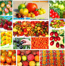 compare prices on tomato tree online shopping buy low price