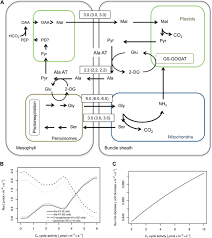 the role of photorespiration during the evolution of c4