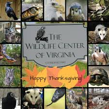 happy thanksgiving 2017 the wildlife center of virginia