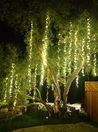 Hanging Tree Lights by 28 Hanging Lights From Trees 76 Hanging Lights In Banyan Tree