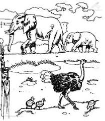 cangooru coloring pages animal colouring pages