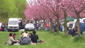 berlin cherry blossom festival 2015 youtube
