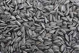 sunflower seeds nile crop co