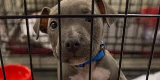 dogs from texas shelters headed to new jersey