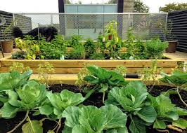 download roof vegetable garden solidaria garden