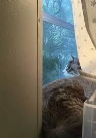 Interior Cat Door With Flap by Ideal E Sensor Pendant With Collar Clip Ideal Pet Doors Logo