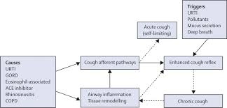 Anatomy And Physiology Of Copd Prevalence Pathogenesis And Causes Of Chronic Cough The Lancet