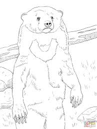 sun bear portrait coloring page free printable coloring pages