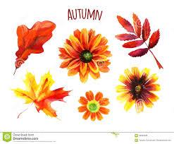 Autumn Flower Watercolor Autumn Flower Set Stock Illustration Image 71216604