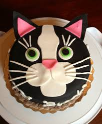 cute cat cakes bing images baking pinterest cake cat and