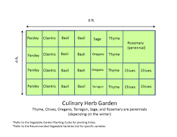 4x8 culinary herb garden layout plans ideas for small garden