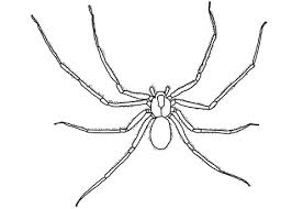 brown recluse spider coloring free printable coloring pages