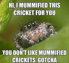 Crickets Meme - misunderstood spider meme mummified crickets spot of fun with a