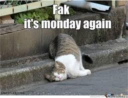 Lazy Meme - lazy cat is lazy by ducani meme center