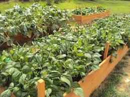 Raised Gardens For Beginners - dollar store for garden supports for inside raised beds playing