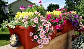 potted flowers potted flowers for outdoors iimajackrussell garages best