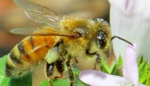 Raising Bees In Backyard by 10 Things To Know Before You Start Beekeeping Life Is Just Ducky
