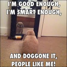 Mirror Meme - no this is what your rabbit is thinking about funny