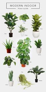 Indoor Plants That Don T Need Sunlight by Best 25 Snake Plant Ideas Only On Pinterest Palm House Plants