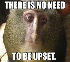 Monkey Face Meme - there is no need to be upset that really rustled my jimmies