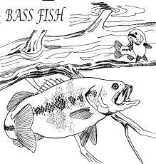 hungry bass fish colouring happy colouring