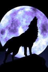 faithful moons wolf moon wolf and