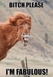 I Am Fabulous Meme - bitch please im fabulous horse meme picsmine