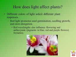 how does light affect plant growth horticulture science lesson 12 understanding light temperature air