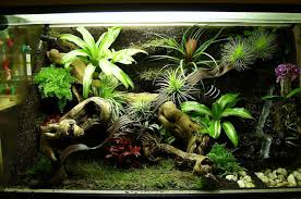 dare to be different allow our terrariums to turn your workplace