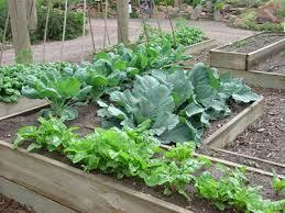 raised bed vegetable gardening for beginners 1083 hostelgarden net