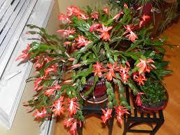 indoor flowering plants indoor flowering plants no sunlight keysindy com