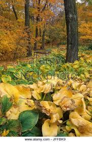 Mn Landscape Arboretum by University Of Minnesota Landscape Arboretum Stock Photos