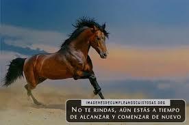 imagenes vaqueras y fraces descargar imágenes de caballos con frases bonitas