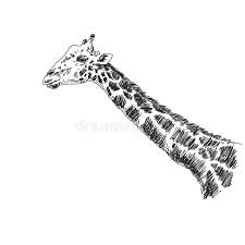 sketch of giraffe stock vector image of illustration 40095870