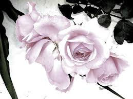 Las flores que nos gustan. Images?q=tbn:ANd9GcTkdvSN_hYzwWnY81n6aVWKZSAs5g8nnQ2WbEI2fWNompxAYwAo
