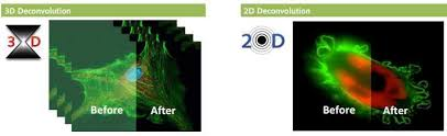 Blind Image Deconvolution Autoquant X3 Advanced Image Deconvolution And 3d Visualization