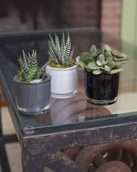 Succulent Pots For Sale Mini Glass Planters With Agave And Other Succulents Set Of 3