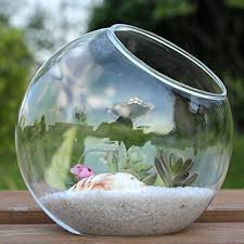 Display Vase Mkouo Tabletop Air Plant Terrarium Planter Decorative Glass Globe