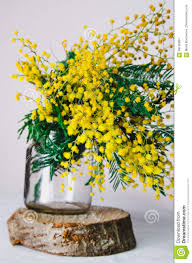 Yellow Home Decor Home Decor Brunch Of Beautiful Mimosa Yellow Spring Flowers In