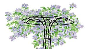 Trellis For Climbers How To Grow Clematis Gardener U0027s Supply