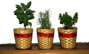 indira naidoo u0027s five tips for starting an urban garden concrete