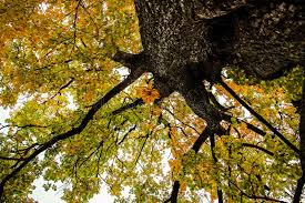 imagenes de bottom up autumn tree the view from the bottom up stock image image of